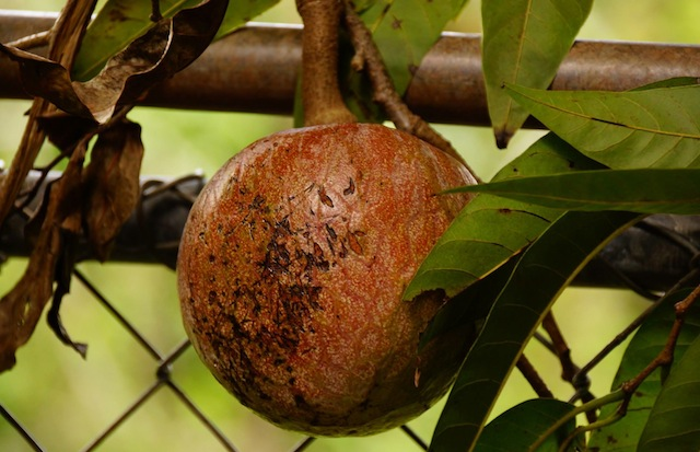 Agrochic Gardening Inspiration Advicela Fruta Corazón Agrochic